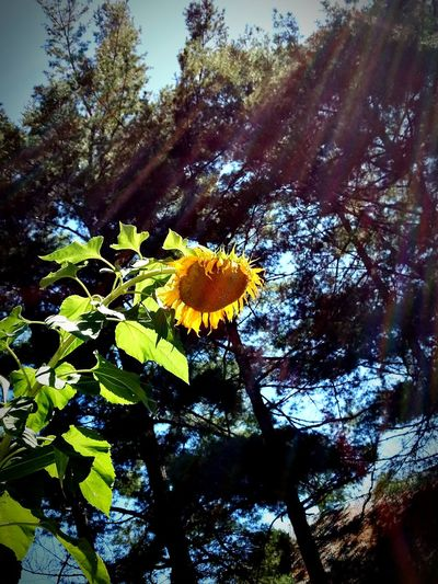 Growth Nature Low Angle View Tree Leaf Beauty In Nature Green Color Flower Day Outdoors Plant Yellow Close-up No People EyeEmNewHere