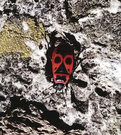 Insetto o maschera africana?