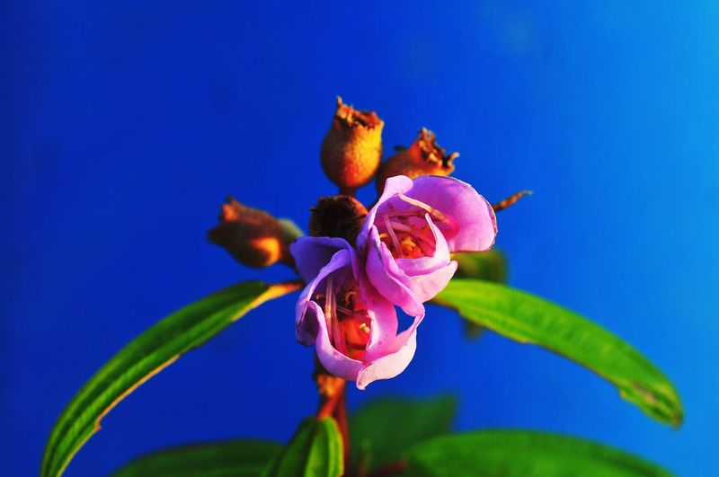 Close-up of purple flowering plant against blue sky