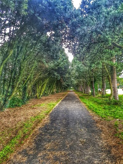 The wooded way . Tree Nature The Way Forward Growth Green Color Tranquil Scene Tranquility Day Outdoors No People Scenics Beauty In Nature Ireland🍀 Samsung Galaxy S7 Dublin, Ireland St Annes Park Raheny