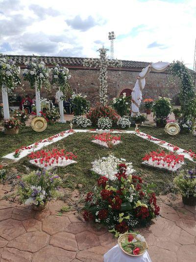 Cruces De Mayo Villanueva De Córdoba The Architect - 2018 EyeEm Awards Flower Spraying Poppy Sky Cloud - Sky Plant Architecture