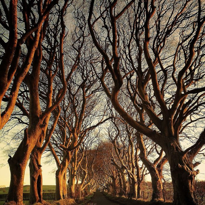 DarkHedges Trees Northern Ireland Landscape Nature Skies Soaking Up The Sun