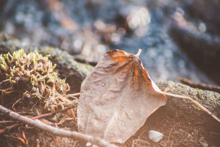 Leaf Plant Part Plant Close-up Nature Dry No People Beauty In Nature Day Land Autumn Fragility Field Vulnerability  Growth Outdoors Focus On Foreground Change Tranquility Selective Focus Leaves Autumn Eyeem Vintage Collection EyeEm Nature Collection Shiny