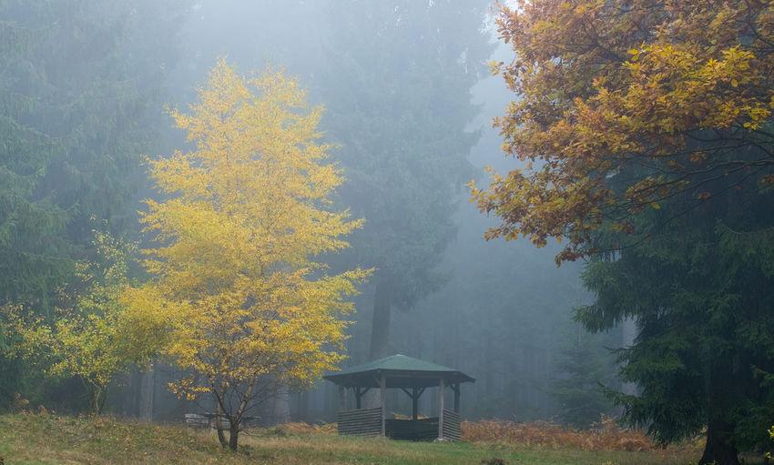 house in fog /