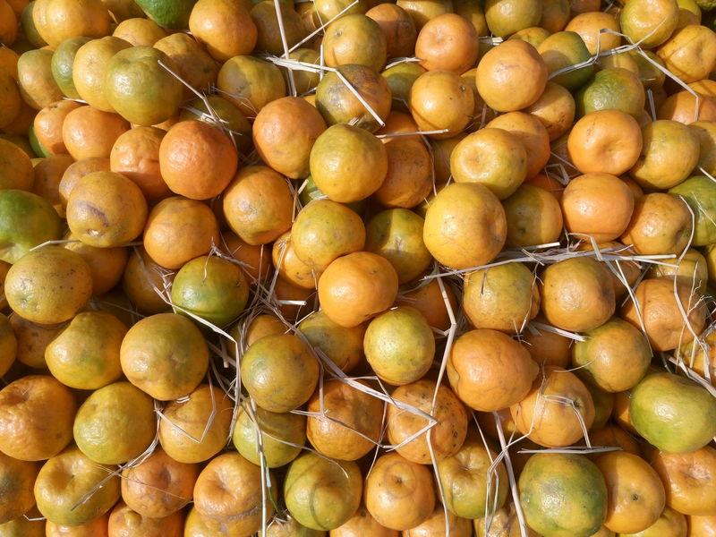 Citrus Fruit Day Food Food And Drink Freshness Fruit Full Frame Healthy Eating Lemon Nature No People Orange Fruit