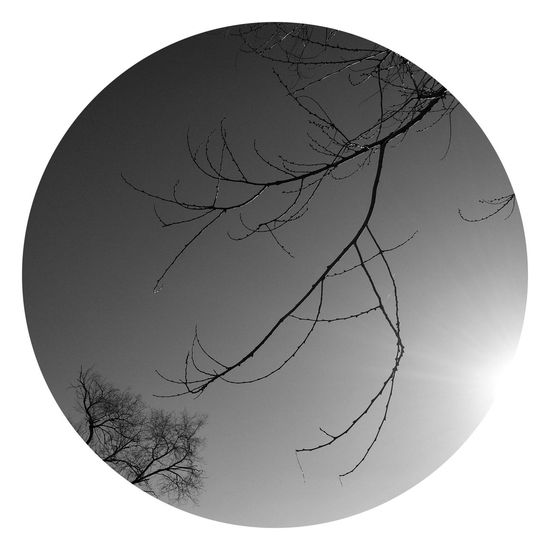 Bare Tree Clear Sky Tree Branch Outdoors Nature No People Day Beauty In Nature Blackandwhite Round Sun IPhoneography