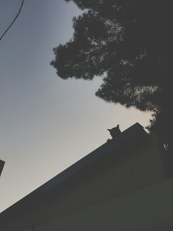 Eye's Cat Sunset Strolling Stare