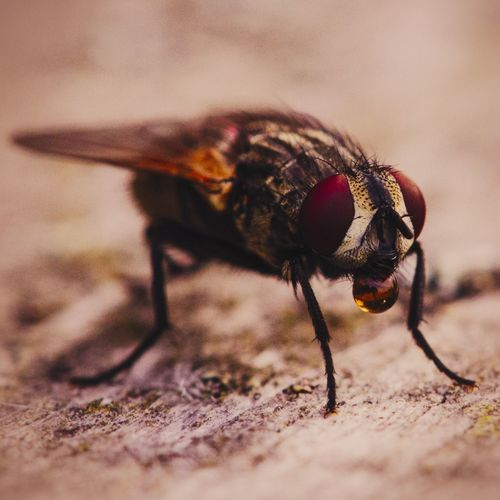 Invertebrate Insect Animal Themes Animal One Animal Animals In The Wild Animal Wildlife Selective Focus Close-up No People Day Fly Housefly Nature Animal Wing Outdoors Animal Body Part Zoology Macro Wood - Material Animal Eye
