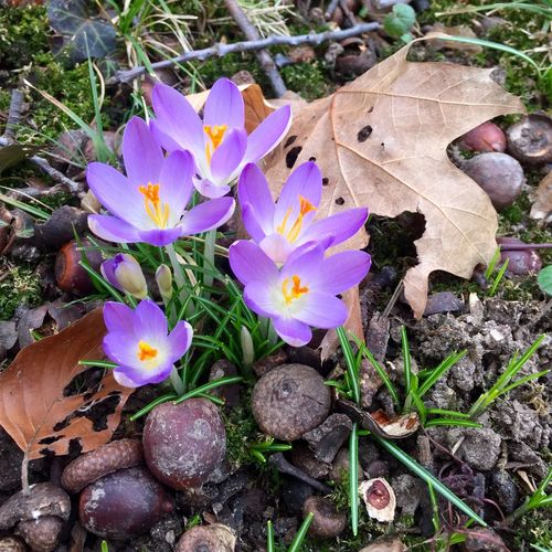 Frühling im Januar Frühling Spring Flowers Daswasichsehe😊 EyeEm Deutschland Tadaa Community Tadaa Friends Krokusblüte January