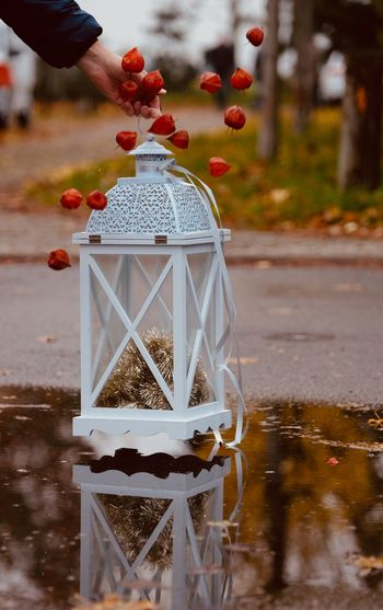 Cropped hand holding lantern with winter cherry over puddle outdoors