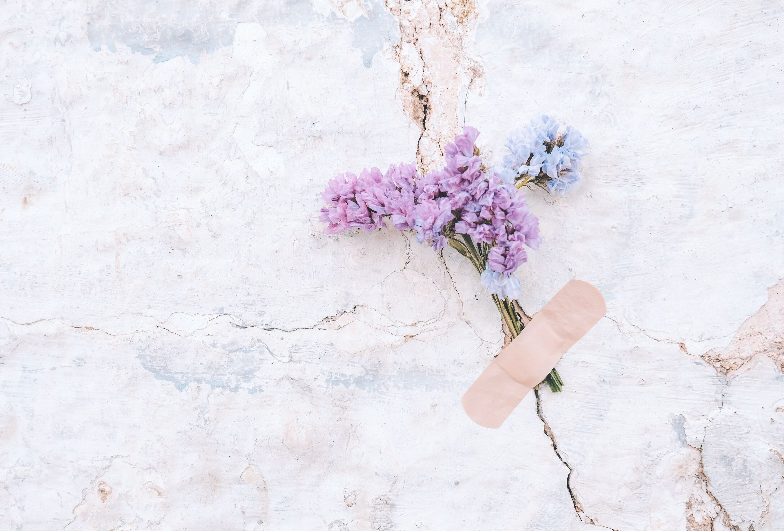 flower, flowering plant, plant, fragility, vulnerability, beauty in nature, freshness, one person, nature, pink color, wall - building feature, real people, petal, inflorescence, flower head, human body part, day, human hand, outdoors, close-up, hand, purple, finger