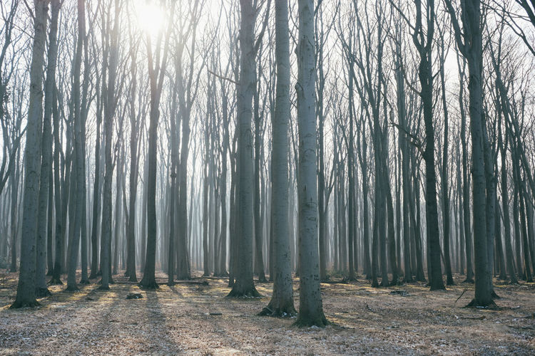 Bäume Gespensterwald Ostsee Beauty In Nature Day Forest Growth Landscape Lihts And Shadows Nature No People Outdoors Scenics Tranquil Scene Tranquility Tree Tree Trunk Wald