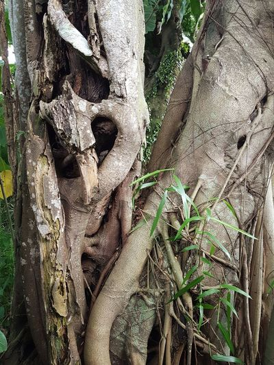 Close-up of roots on tree trunk in forest