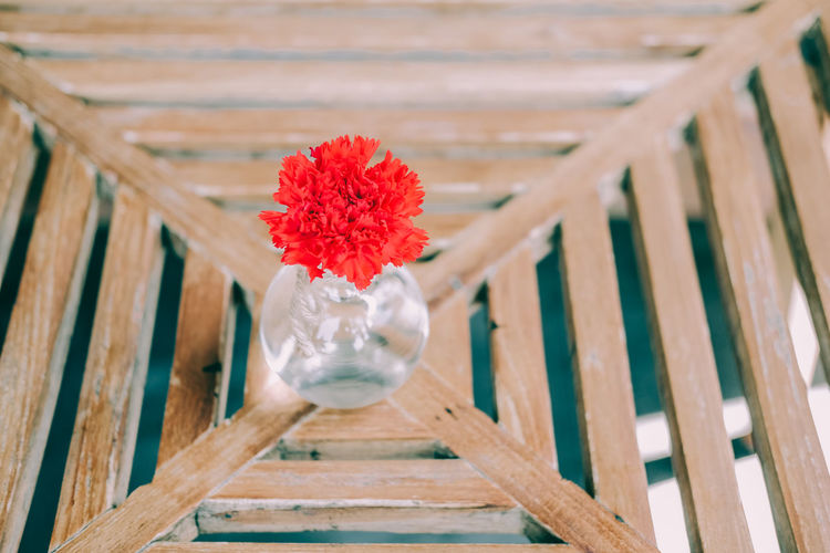 Close-up of red flower in pot on table