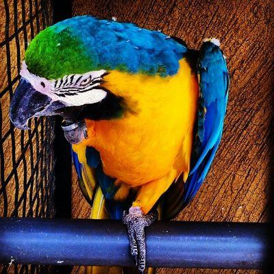 Paradise Bird Bird Animals Cute Colors feather zoo cute instadaily igers ig hot sexy fun