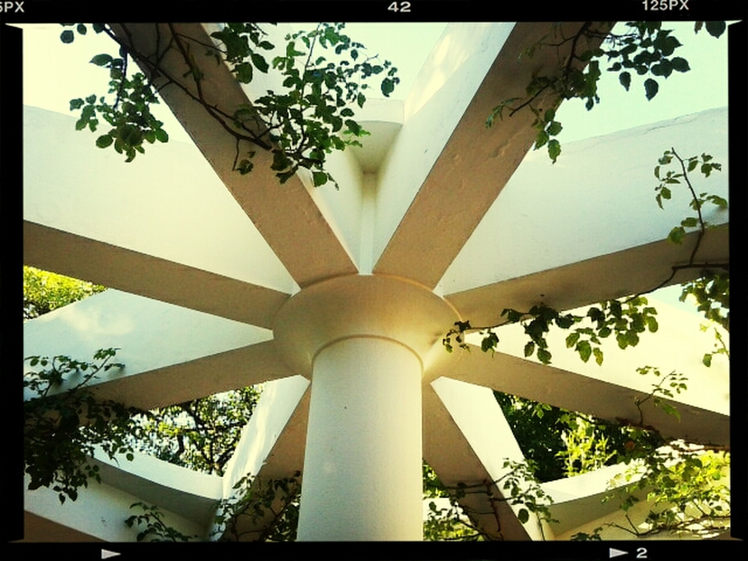 low angle view, built structure, indoors, architecture, transfer print, ceiling, auto post production filter, sunlight, tree, day, no people, design, sky, architectural feature, growth, pattern, architectural column, building exterior, directly below, column