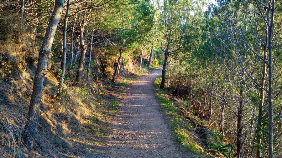 Hiking Relaxing Mountains Nature Mijas CostadelSol Picodemijas Senderismo Naturaleza Montanas Trees Path