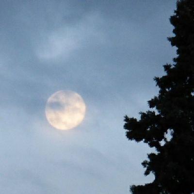 Con sorpresa entre las nubes. Lunalunera Moon Tree Skylovers atrapanubes nubesdehoy