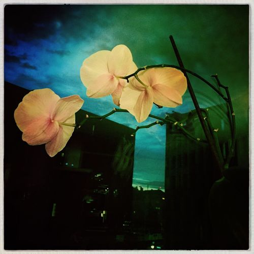 Home Is Where The Art Is Lovemyhome Lovemyview Lovelyview Sunset Orchids Greenhome Plants At Home