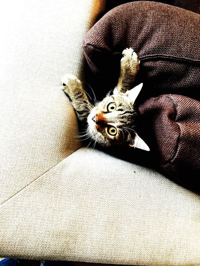 Cat♡ Animals Love♥ Beautiful Nature Eyes Emotion Goodmorning ♥