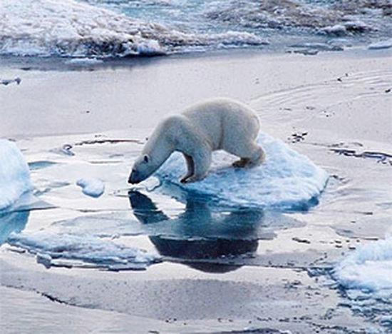 Ice Age Ice With Amazing View Drinking Water Deer Love Animals💕 Winter Wonderland
