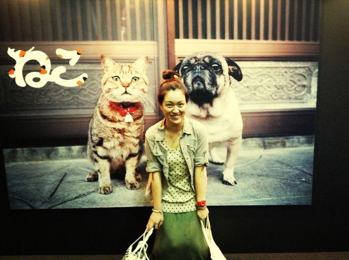 Cat&xinxin&dog