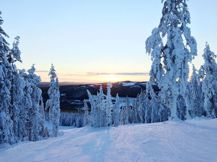Winter Ski Skiing Sweden Rommé Snow White