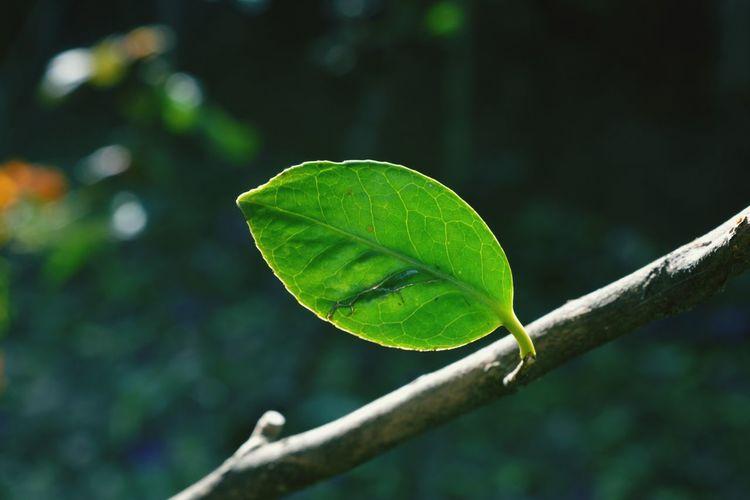 Macro shot of leaf on twig