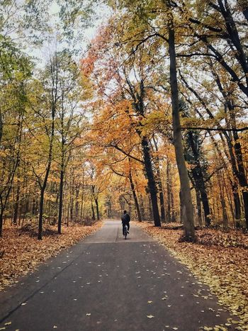 Sundays. Fall Season  Orange Bicycle Bike Riding Riding A Bike  Tree Plant Real People The Way Forward Direction Transportation One Person Day Nature Road Lifestyles Leisure Activity Growth Rear View Autumn Change