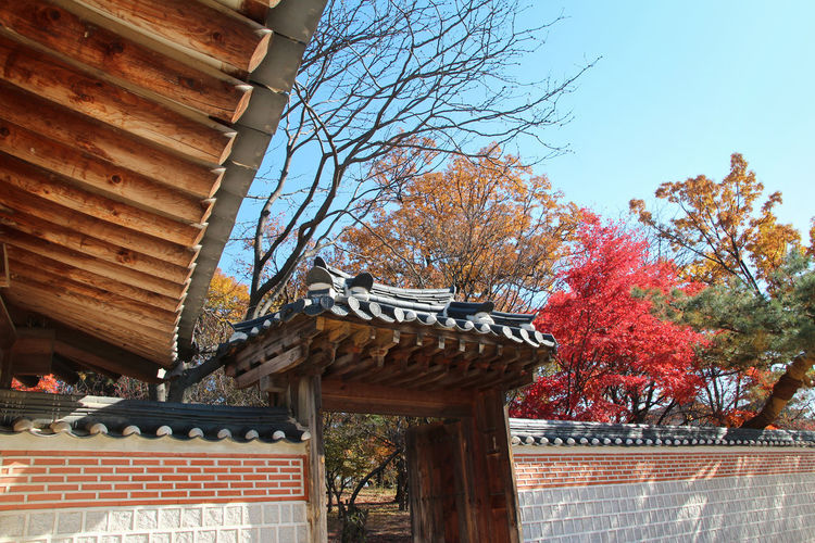 The korean traditional door (entrance) with the colourful leaves in autumn at the Gyeongbokgung Palace, Seoul, South Korea Ancient Clear Blue Sky Entrance Gate Korean Traditional Architecture Red Maplesleavs Roof Seoul South Korea Sunlight Sunny Blue Branches And Leaves Cultures Door Gyeongbokgung Palace, Seoul History Outdoors