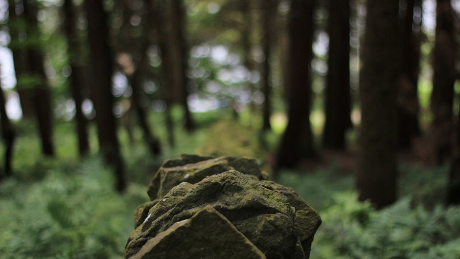 Beauty In Nature Close-up Day Focus On Foreground Forest Growth Nature Non-urban Scene Outdoors Scenics Tranquil Scene Tranquility Tree Tree Trunk Wilderness WoodLand
