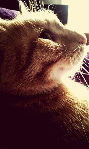 Orangecat Cat Cat♡ Cat Lovers Catoftheday Cats Of EyeEm Catlover