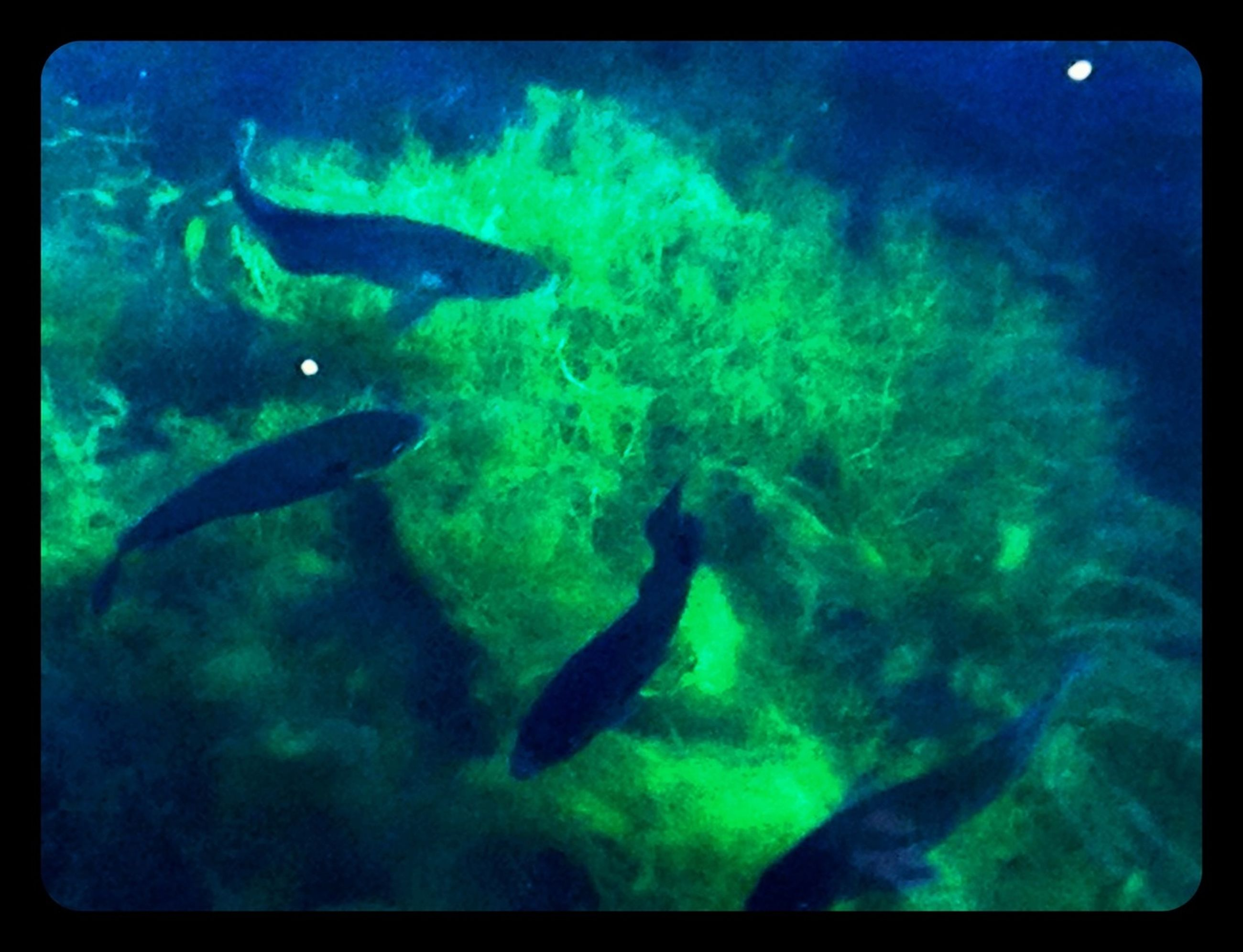 underwater, animal themes, animals in the wild, wildlife, swimming, transfer print, sea life, undersea, blue, fish, auto post production filter, water, sea, one animal, nature, aquarium, school of fish, beauty in nature, two animals