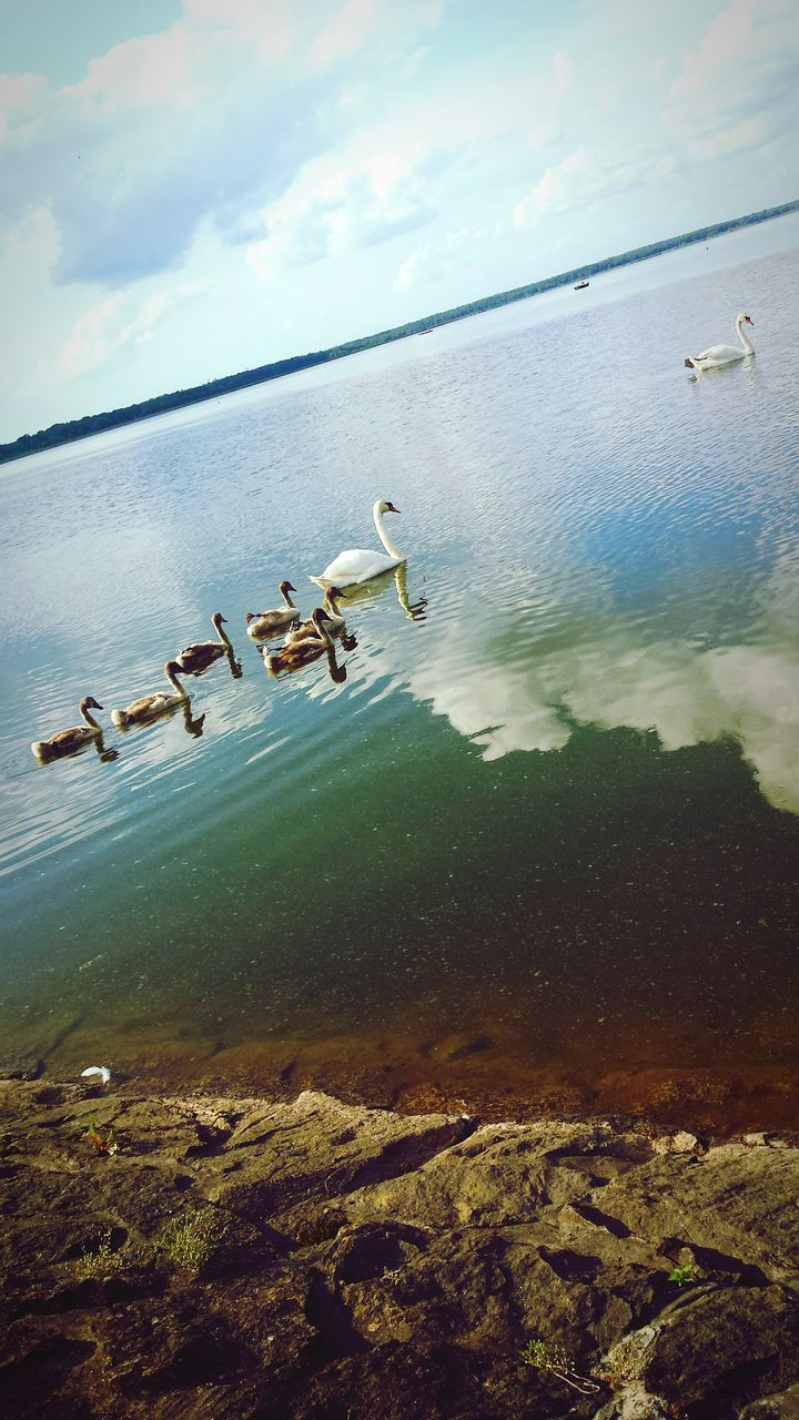 animal themes, animals in the wild, bird, water, large group of animals, animal wildlife, nature, lake, wildlife, no people, flying, day, swimming, beauty in nature, seagull, outdoors, sky, swan