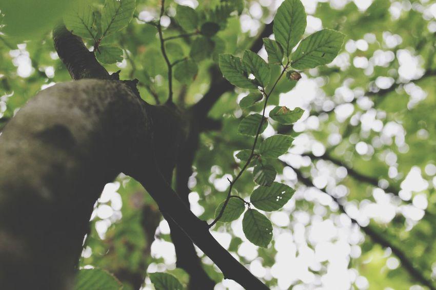 Hello World Trees Relaxing Enjoying Life