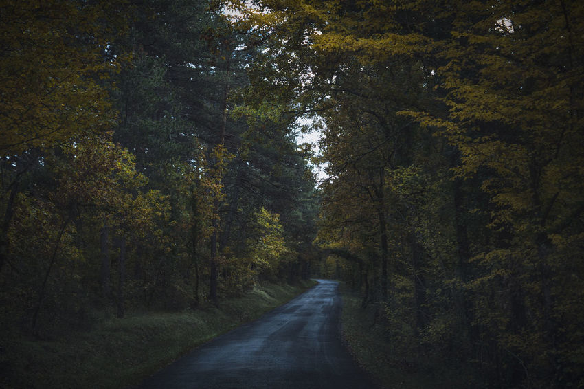 Tree Plant Direction Road The Way Forward Transportation Forest Growth Tranquility No People Beauty In Nature Land Tranquil Scene Nature Non-urban Scene Day Diminishing Perspective Scenics - Nature Autumn Empty Road Outdoors WoodLand Change