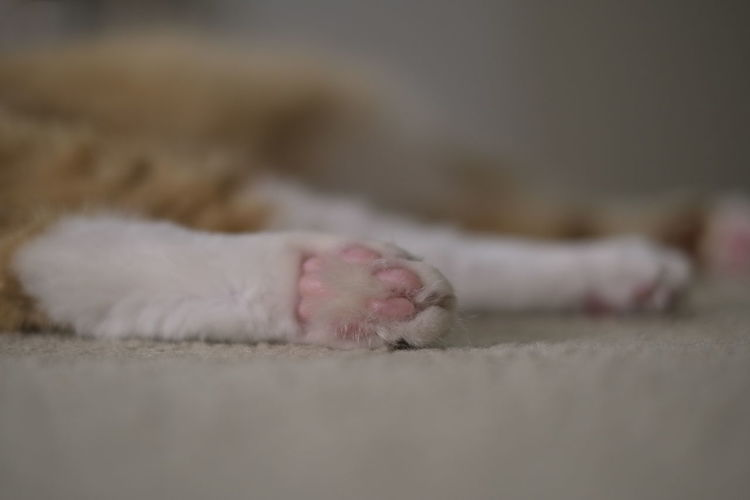 Close-up of cat lying down