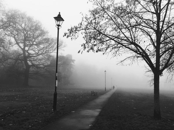 Postcode Postcards Fog Tranquility Foggy Winter Cold Temperature Tree Tranquil Scene IPhoneography Iphoneonly London Park Black And White Photography Black&white Stroll North London Enfield