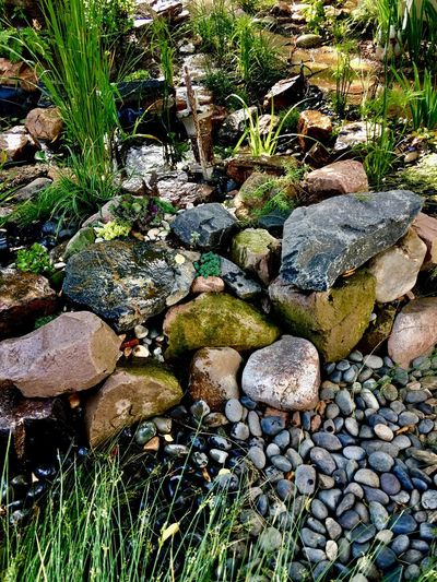 Rock - Object Pebble Stone - Object Nature Day Outdoors Green Color No People Tranquility Moss Beauty In Nature Pebble Beach Water Grass Close-up Pond Garden Garden Photography Gardening Plant Plants Plants And Flowers Gardens Waterscape Water Surface
