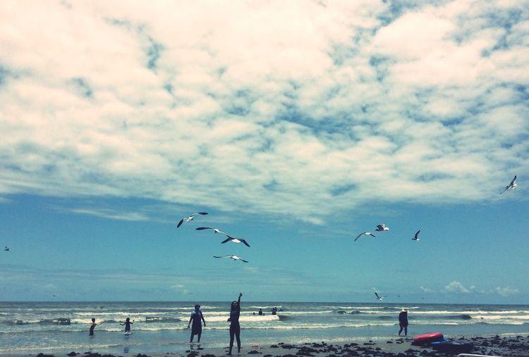 Birds flying over beach against sky