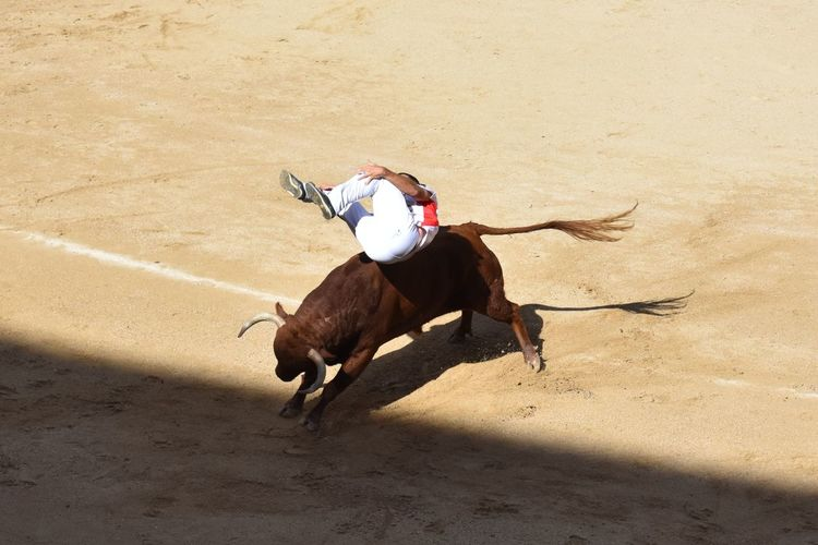 High angle view of horse running on sand