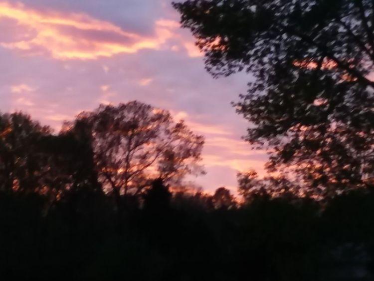 Tree Sunset Tree Area Forest Silhouette Dramatic Sky Sky Landscape Cloud - Sky Pine Tree Pine Woodland Treetop Moody Sky Glade WoodLand