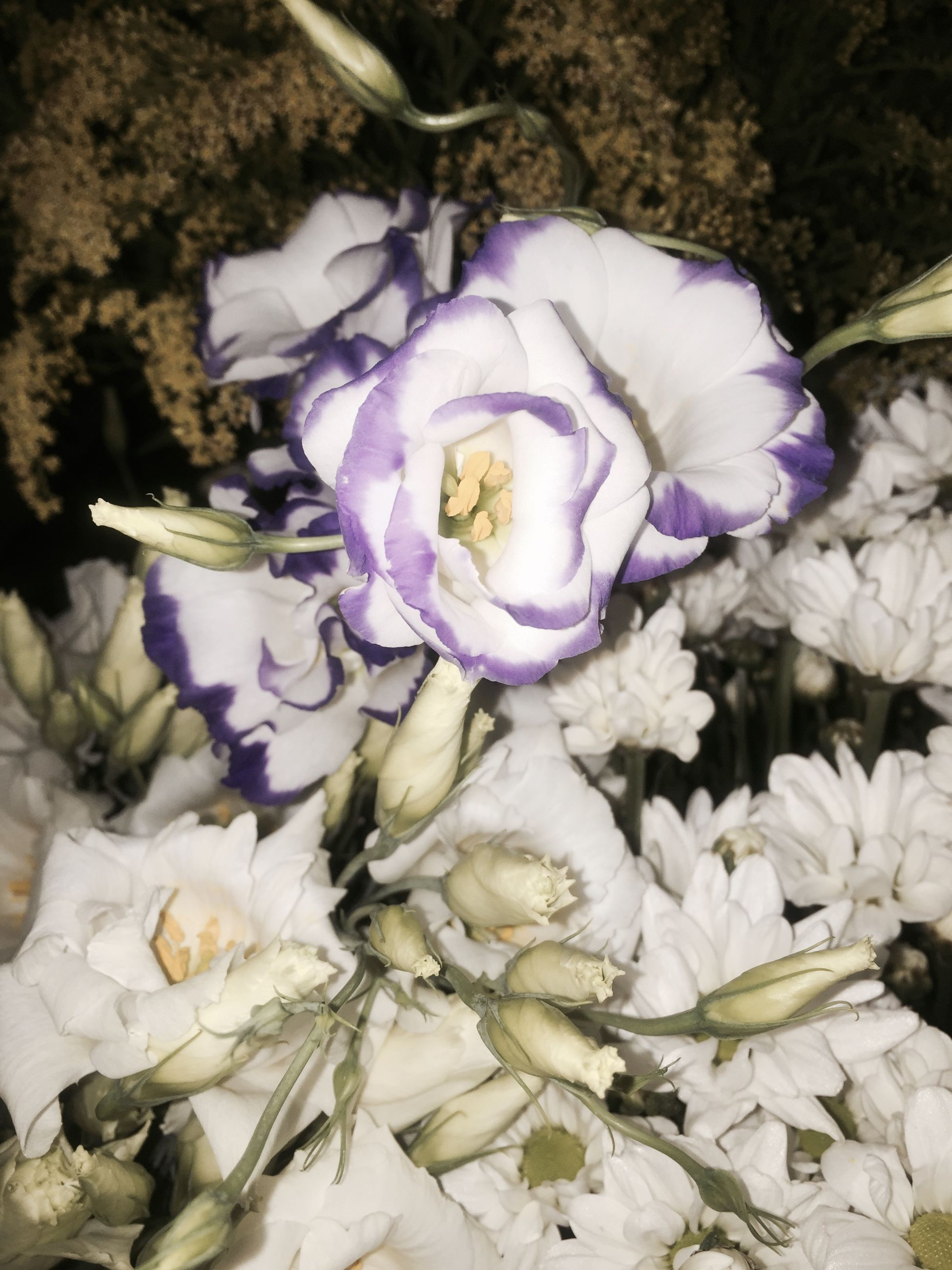 flower, petal, fragility, flower head, freshness, purple, close-up, nature, growth, beauty in nature, high angle view, blooming, plant, no people, white color, outdoors, day, in bloom, leaf, botany