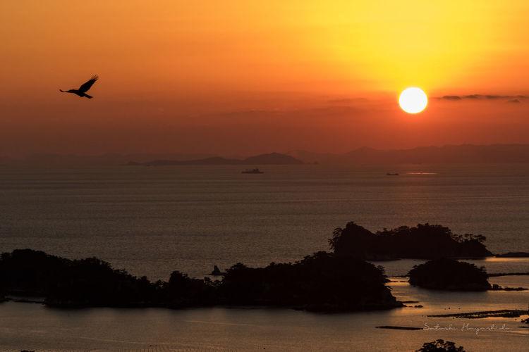 Beauty In Nature Bird Flying Island Nature Sea Sun Sunset