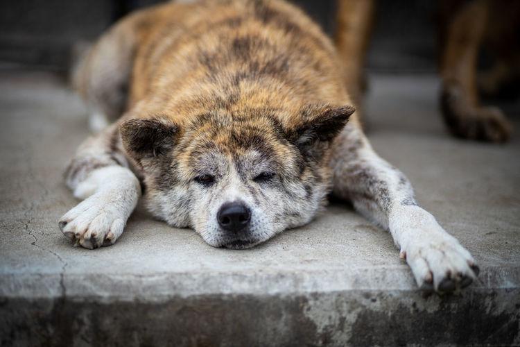 Close-up of a dog sleeping