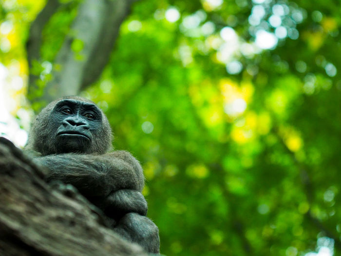 Monkey sitting in a forest