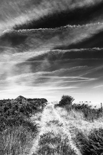 Chemin The Way