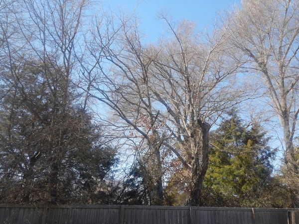 Backyard Photography Weathered Fence Dead Trees Backyard Bliss Wooded Area Fenced In Yard Cold Sky Clear Details