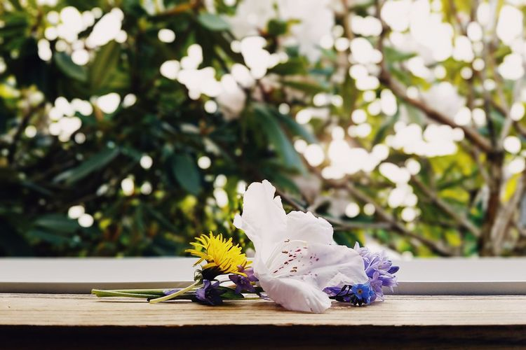 Flower Flower Arrangement Fragility Flower Head Close-up No People Nature Petal Day Outdoors Freshness Beauty In Nature Bouquet Tree
