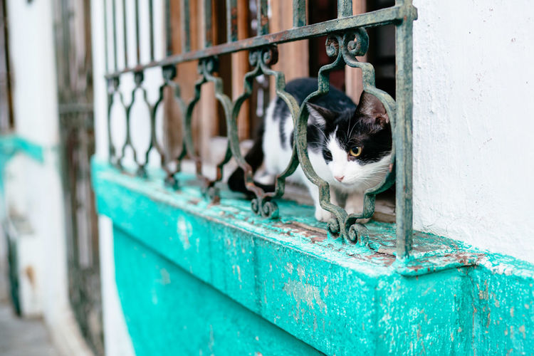 View of a cat on metal fence